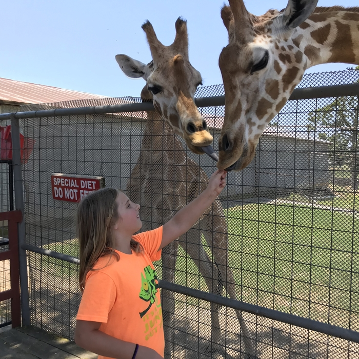 All the kids were given the opportunity to feed the giraffe.